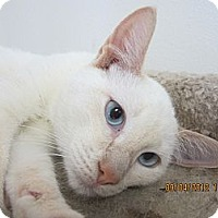 Adopt A Pet :: Spark - Bunnell, FL