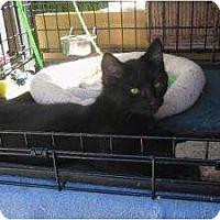 Adopt A Pet :: Naomi - Brea, CA