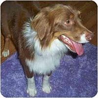 Adopt A Pet :: Quinton - Orlando, FL