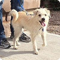 Adopt A Pet :: Preston - Phoenix, AZ