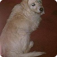 Adopt A Pet :: Izzy - Bardonia, NY