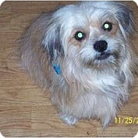 Adopt A Pet :: Bosco - Andrews, TX