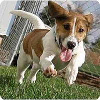 Adopt A Pet :: Barney - Meridian, ID
