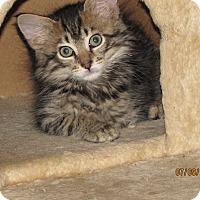 Adopt A Pet :: Carlos - Southington, CT