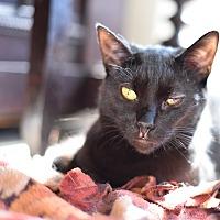 Adopt A Pet :: Maxine - Xenia, OH