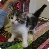 Adopt A Pet :: Rigby - Geneseo, IL