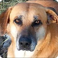 Adopt A Pet :: Moses - n - Huntington, NY