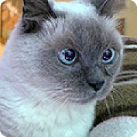 Adopt A Pet :: Cinderella - Durham, NC