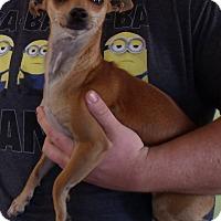Adopt A Pet :: BAMBI - Corona, CA