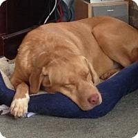 Adopt A Pet :: Tami - Grafton, WI