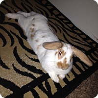 Adopt A Pet :: Ian - Paramount, CA