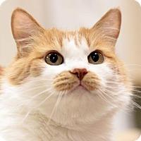 Adopt A Pet :: Nona - Woodland Hills, CA
