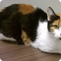 Adopt A Pet :: Lissa - Shorewood, IL
