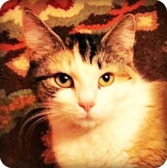 Calico Cat for adoption in Burlington, North Carolina - EVIE