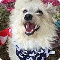 Adopt A Pet :: GEO - Los Angeles, CA