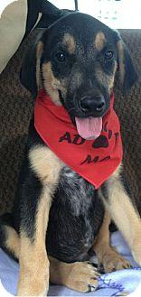 Retriever (Unknown Type)/Shepherd (Unknown Type) Mix Puppy for adoption in San Ysidro, California - Dean