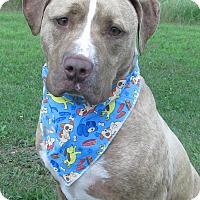 Adopt A Pet :: Blaze - Menomonie, WI