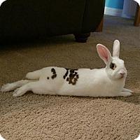 Adopt A Pet :: Charlie - Williston, FL