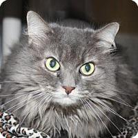 Adopt A Pet :: Mishka - Salem, MA