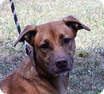 Labrador Retriever Mix Dog for adoption in Mukwonago, Wisconsin - **DIAMOND** MEET DEC 17TH!