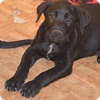 Adopt A Pet :: Smores - San Diego, CA