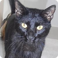 Adopt A Pet :: Chipper - Georgetown, TX