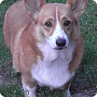 Adopt A Pet :: Didi: Adoption Pending - Verona, NJ