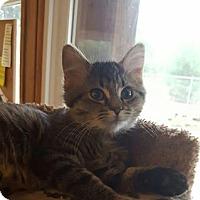 Adopt A Pet :: Sapphire - Hanna City, IL