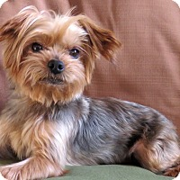 Adopt A Pet :: Hudson - Encino, CA
