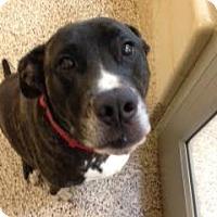 Adopt A Pet :: Moose - Aiken, SC