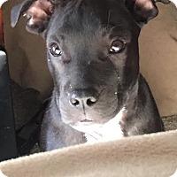Adopt A Pet :: Sayda - Blountstown, FL