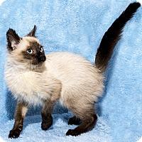 Adopt A Pet :: Noah - Mt. Prospect, IL
