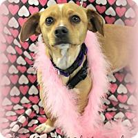 Adopt A Pet :: Heidi - Lodi, CA