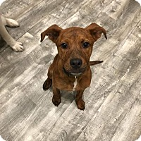 Adopt A Pet :: Aggie - Hagerstown, MD