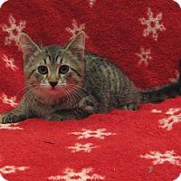 Adopt A Pet :: Cosmo - Redwood Falls, MN