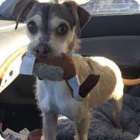 Adopt A Pet :: Walnut - Palo Alto, CA