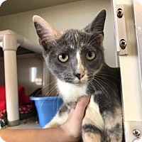 Adopt A Pet :: Mary - Fort Collins, CO