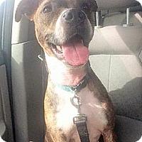 Adopt A Pet :: COURTESY LISTING: Sadie - San Diego, CA