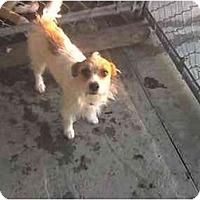 Adopt A Pet :: Jackie - Fowler, CA