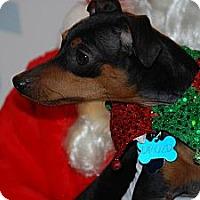 Adopt A Pet :: Bert - Ogden, UT