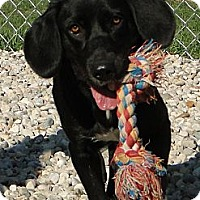 Adopt A Pet :: Melissa - Lewisville, IN