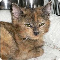 Adopt A Pet :: Marni - Brea, CA