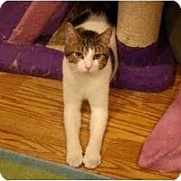 Adopt A Pet :: Orin--PETSMART - Muncie, IN
