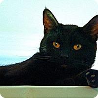 Adopt A Pet :: Rosalia - Victor, NY