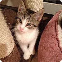 Adopt A Pet :: Rita - East Hanover, NJ