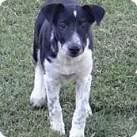 Adopt A Pet :: Zinnia - Lancaster, OH