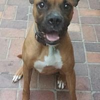 Adopt A Pet :: Raspberry - Porter Ranch, CA