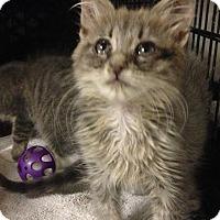 Adopt A Pet :: Babe Ruth - East Brunswick, NJ
