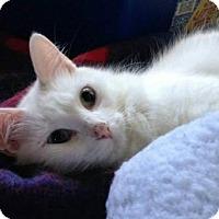Adopt A Pet :: Flurry - Hamilton, ON