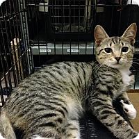 Adopt A Pet :: Sherman - East Brunswick, NJ